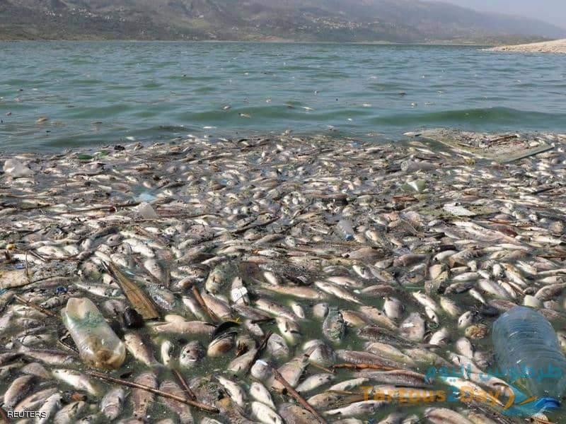 نفوق 40 طن من الاسماك في لبنان وتهريبها الى سوق سوريا