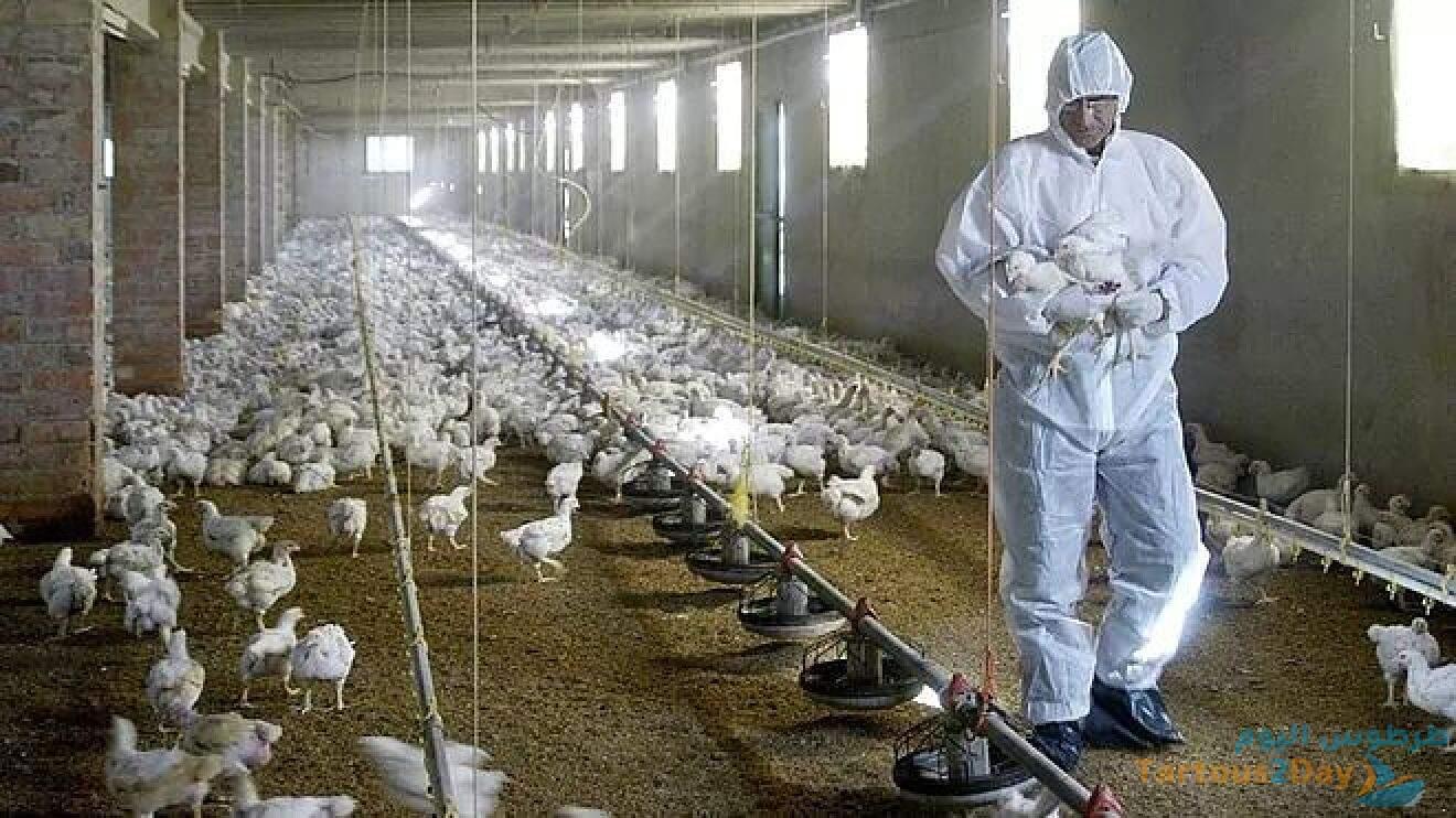 الصين .. تسجيل أول إصابة بشرية في العالم بـ انفلونزا الطيور H10N3 bird flu